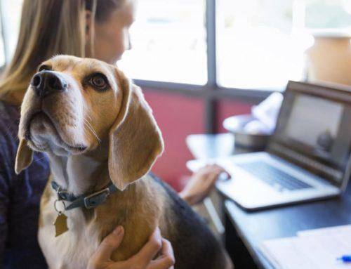La presencia de mascotas en el trabajo contribuye a reducir el estrés laboral. ¡Llevarías tu perro al trabajo?
